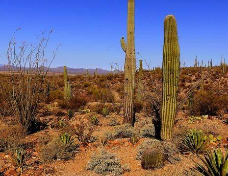 Amerika-Tucson-Saguaro-NP-2