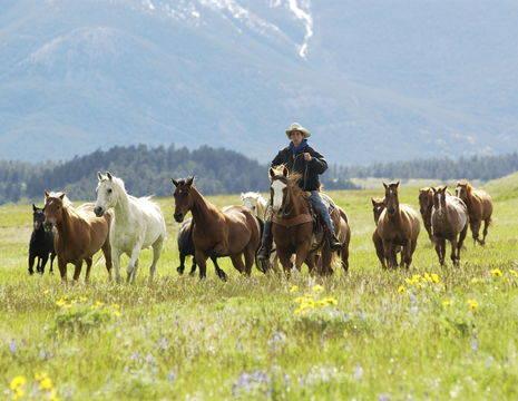 Amerika-Verenigde-Staten-Glacier-National-Park-Herding-horses