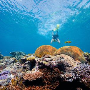 Australie-Great-Barrier-Reef-onderwaterwereld-snorkelen_1_560383
