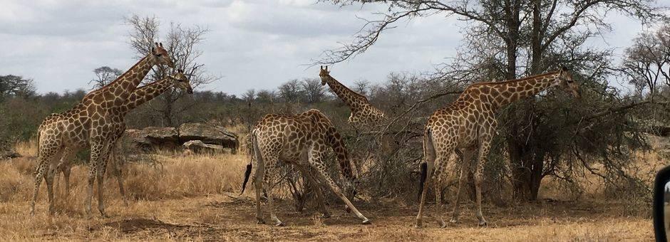 Zuid-Afrika-Krugerpark-Wildleven1_1_386780