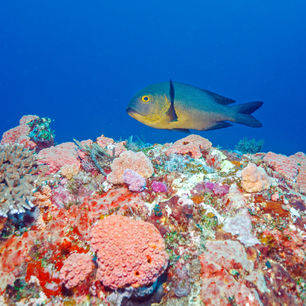 Indonesie-Lombok-onderwater55