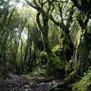 Cameronhighlands-Berinchangmossyforest2