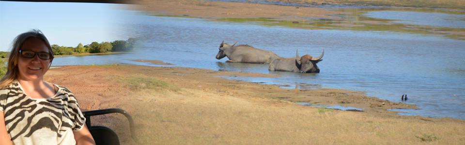 Op avontuur in het Yala National park