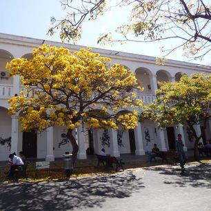 Herfstkleuren-Santa-Cruz-Bolivia_2_352938
