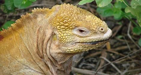 lizard-298404_1920