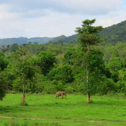 Olifant in Kuiburi National Park