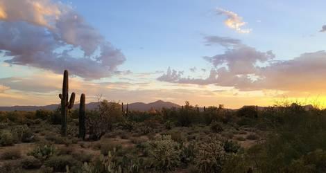 Amerika-Tucson-Saguaro-NP-4