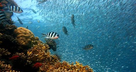 Pearl-Island-Vissen