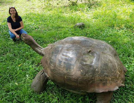reuzenschildpad op Santa Cruz