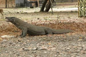 Labuan Bajo: Dagexcursie naar Komodo