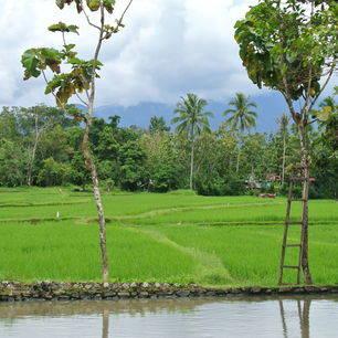 Sumatra-Bukittinggi-Rijstvelden1