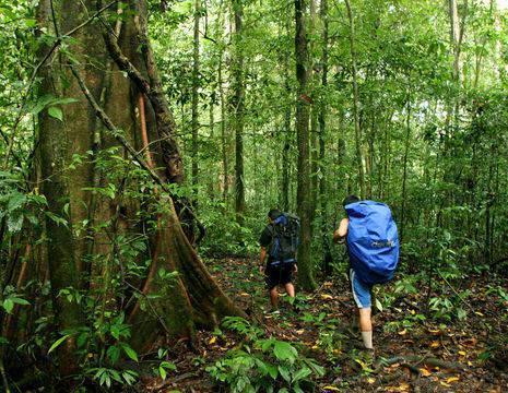 Hiken in het Mulu National Park op Sarawak
