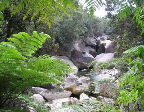 Australie-Atherton-Tablelands-jungle_1_560147