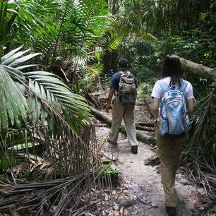 Sarawak-BakoNP-jungletrekking