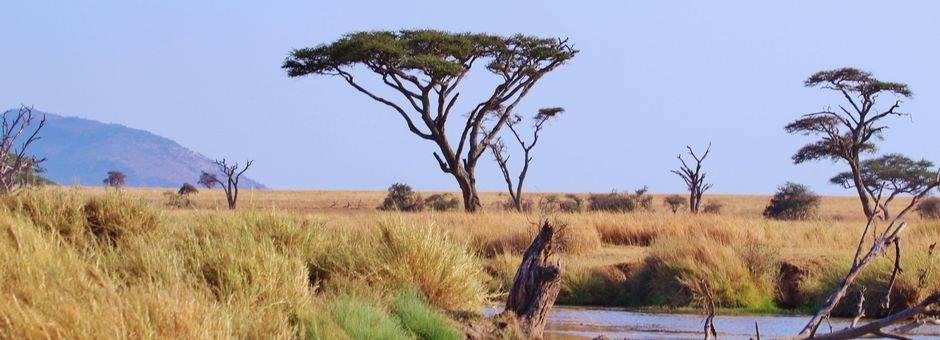 Tanzania-Serengeti-Ruime-vlakte