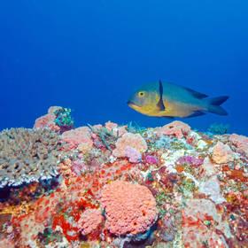 Kleurrijk onderwaterwereld Gili eilanden