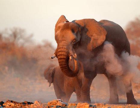 Etosha NP safari shutterstock_147266945(12)