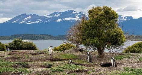 Chili-Isla-Navarino