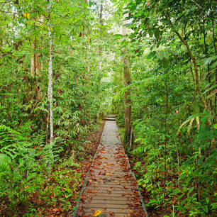 TamanNegara-vlonder-voetpad-door-de-jungle