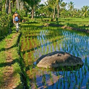 Indonesie-Lombok-wandelen-sawah(8)
