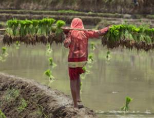 Laos-VanVerre1 (6)