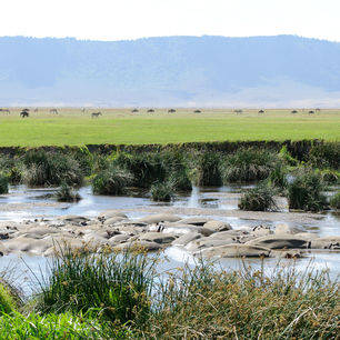 Tanzania-Ngorogoro-krater-4-nijlpaard