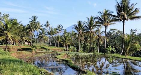 Java-Rijstvelden-Nagrak-Omgeving