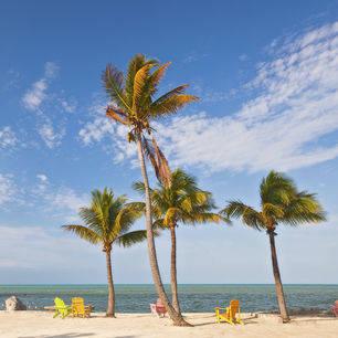 Amerika-Key-West-Palmbomen-1_1_518269