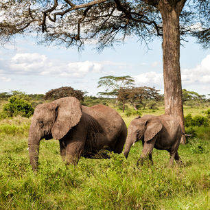 Tanzania-Serengeti-olifanten1_1_422631