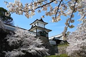 Het kasteel van Kanazawa omringd door Kersenbloesem in Japan