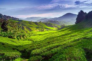 Rondreis Maleisie