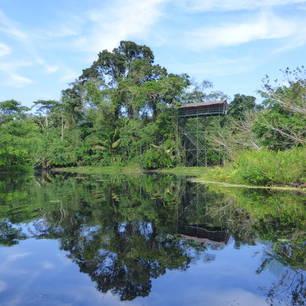 Zie-het-groen-va-de-jungle-schitteren-in-het-water(10)
