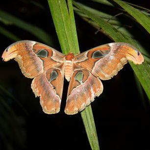 Maleisie-Taman-Negara-vlinder1_1_418880